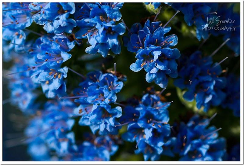 flowers-0712