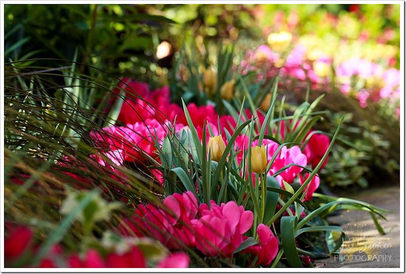flowers-0819