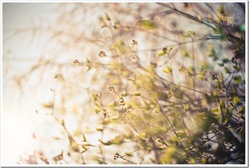 spring-1497