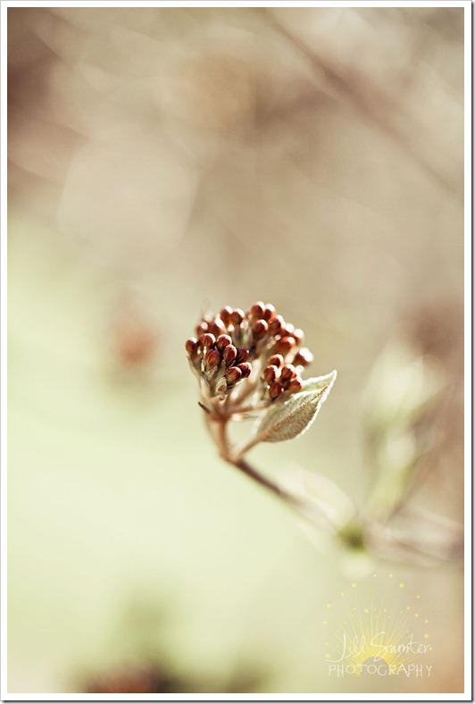 spring-1502