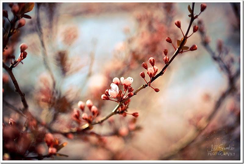 spring-1516