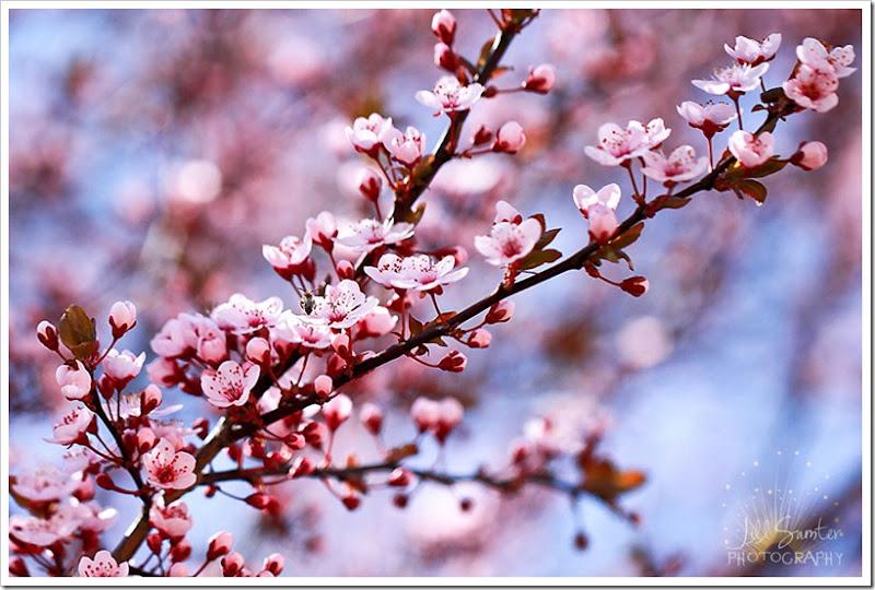 spring-1511