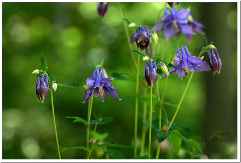 flowers-3205