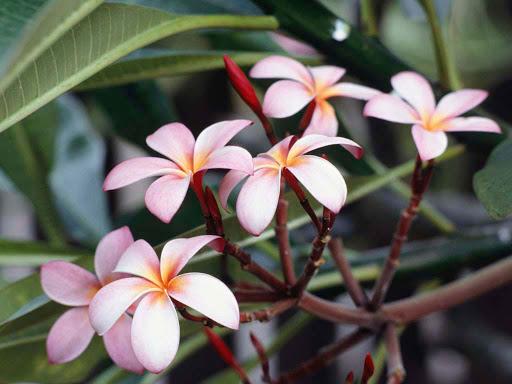 Flores Exoticas [muy lindas]