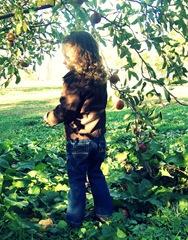 apples1