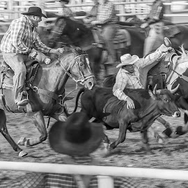 Kansas Rodeo by Esther Lane - News & Events Sports ( rider, horses, black and white, cowboys, event, rodeo,  )