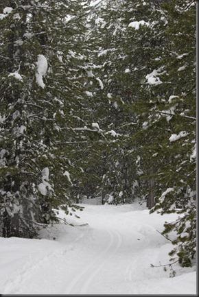 Ski Tracks1