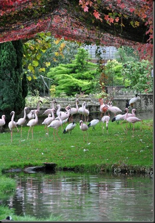 Less Flamingo enclosure (resized) in Autumn colours 2