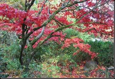 Autumn vibrance at Paignton