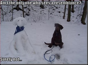 7929c_funny-dog-pictures-this-snowman-looks-like-your-dog