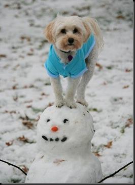 dog_on_snowman
