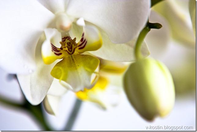 20100418_134619_flowers__MG_0174