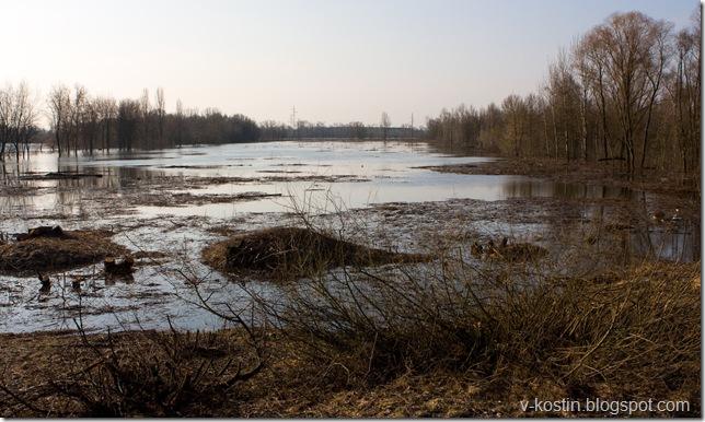 Река Сож, разлив