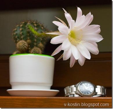20091007-224532-cactus-_MG_3782