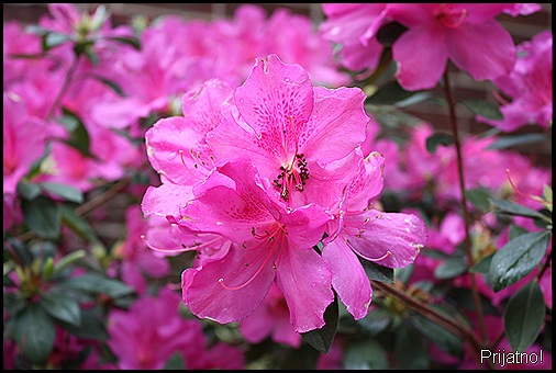 garden, march 09 002