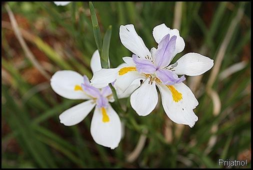 garden, march 09 010