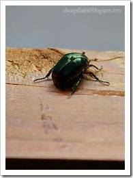 2-8 Bug