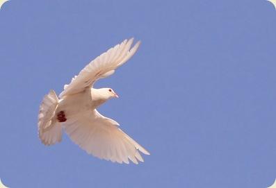 Flying by Liesie