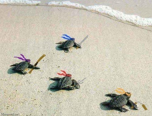 [Fixo]Gifs inúteis Turtle