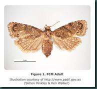 FCM_DorsalViewFemale_Figure1_pp