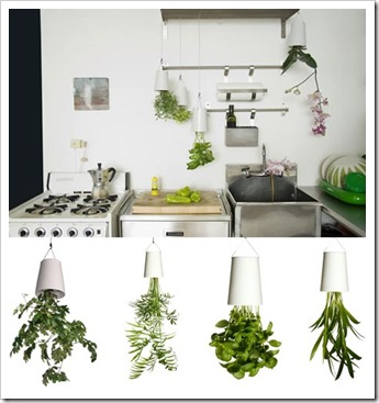 hanging-potted-plants