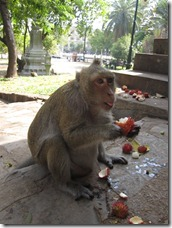 monkeys neat the temple
