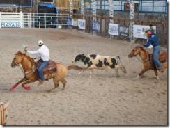 cavalosquarto