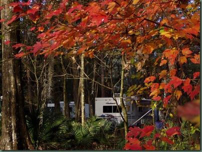 florida fall colors