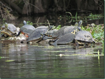 Turtle cluster
