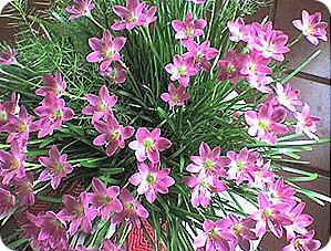flores20