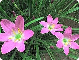 flores17