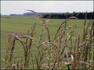 verschillende soorten grassen!