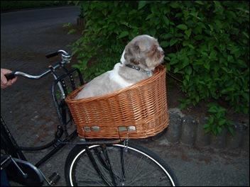 Lara voor het eerst op de fiets mee!