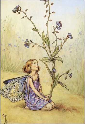 forget_me_not_flower_fairy