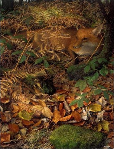 A Fox Resting