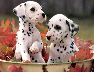 polka dot dog