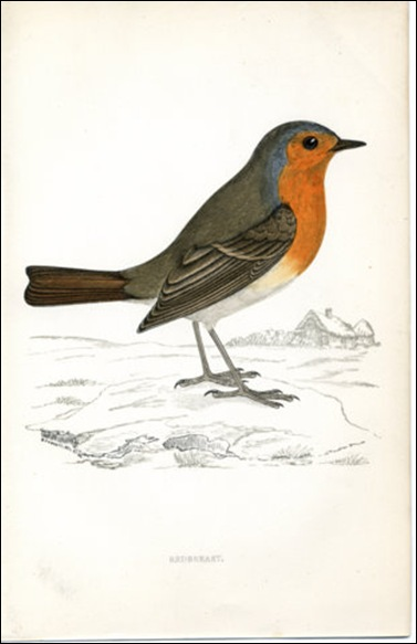 Redbreast 1880 Engraving