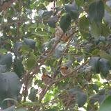 枝上趴着肥肥的小鸟