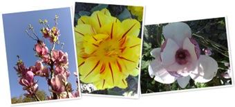 Vizualizare Flowers
