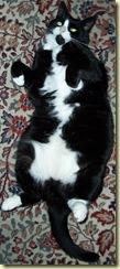 cat-28.11.08.2
