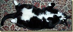 cat-28.11.08.3