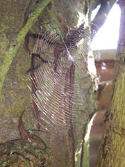 Web in a wood