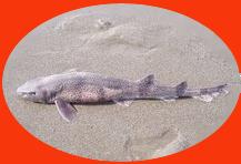Dead shark copy