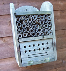 Rogue Leaf-cutter bee on Insect House