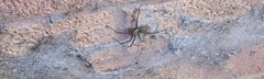 Garden spider and funnel web