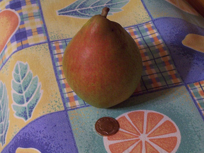 Ripe Williams' Pear