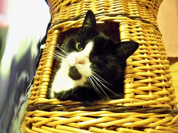 Cat hide 3