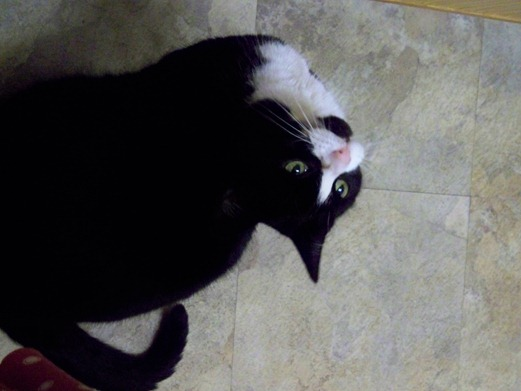 Cat waiting for roast chicken 4