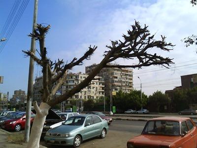 تحطيم الشجرة