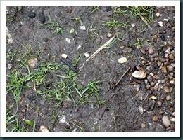 Garden 24 Feb 2010 009